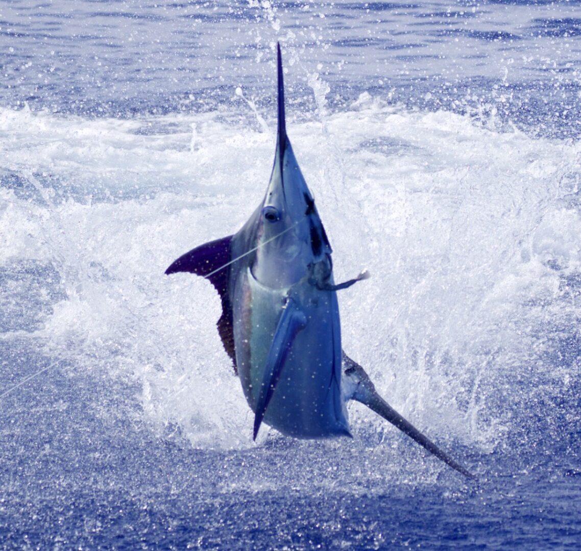 Nemesis Sport Fishing